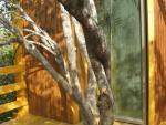 בתי עץ דקו (12)